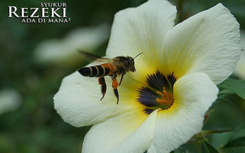 bunga-d-kupu2ttg-rezeki